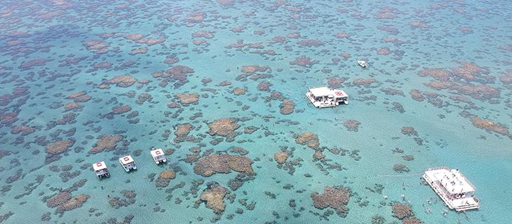 Corais de Maracajaú: veja agora cinco motivos para conhecer esse paraíso